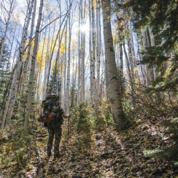 2016 DIY Colorado Backcountry Elk Hunt #1